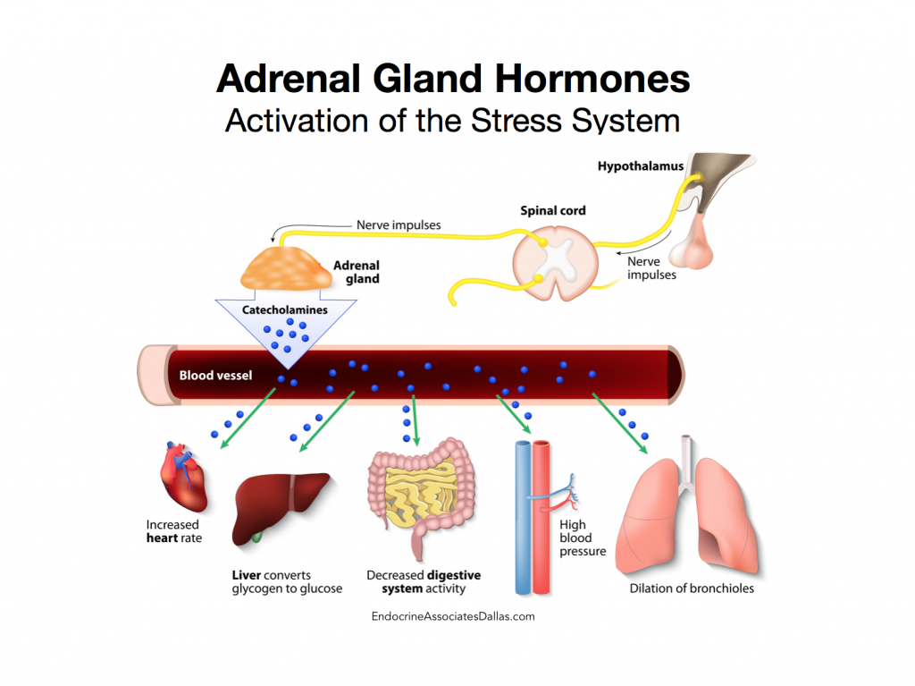 Endocrine Associates of Dallas & Plano treat Adrenal Gland Disorders